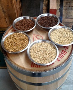 Malted-barley-at-Westland-Distillery